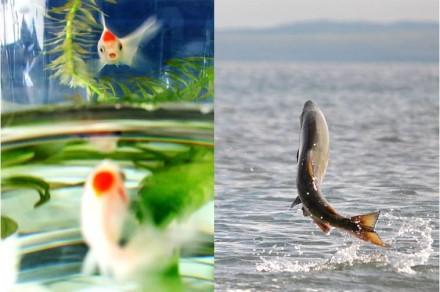 peixe5